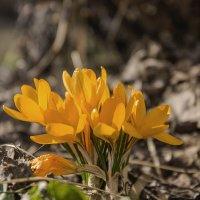 Весна :: Николай Климович