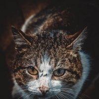 мартовский кот :: валера