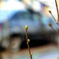 весна! :: Сергей F