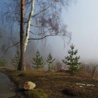 Утро туманное :: Марина Морозова