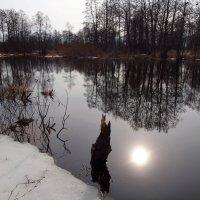 Отражение. :: Андрей Зайцев