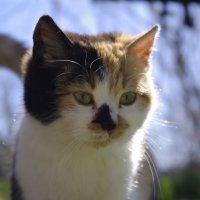 Соседский котенок :: Алексей Климов