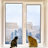 Первый снег :: Александр Буслов