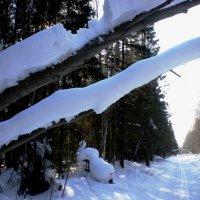 Зимний лес :: Ирина Kivi