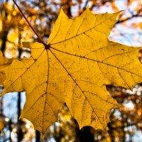 Осенний лист :: Владимир Пометов