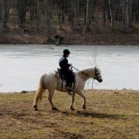 Лошадь :: Елена Савельева