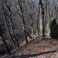 ...злотая цепь..под камнем тем. :: Евгений Khripp