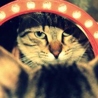 Свет мой зеркальце скажи.... :: Ирма .