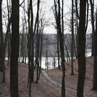 Лес, озеро... :: Николай Ефремов