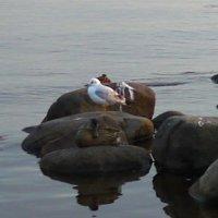 Тихий вечер 2. Берег финского залива в Комарово. :: svetlana
