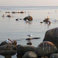 Тихий вечер3. Берег Финского залива.Комарово. :: svetlana