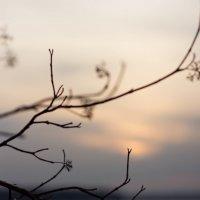 красивый закат :: Диана Силантьева