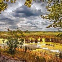 Украинское болотце... :: АндрЭо ПапандрЭо