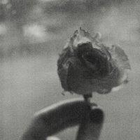 rose. :: Юля Рудакова