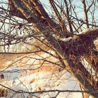 Прошлогоднее гнездо :: Juliya Fokina