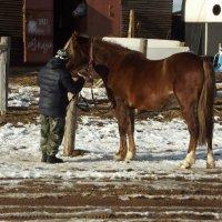 я люблю свою лошадку :: Сергей Кочнев
