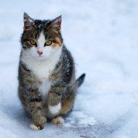 Мороз крепчает. :: Светлана Шаповалова