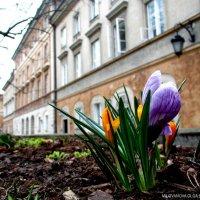 Варшава. Весна. :: Ольга Милованова