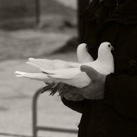 голубки :: Alena Кonstantinova
