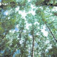 Зеленый шум :: Константин Беляев