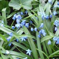 первые весенние цветы... :: Просто witamin