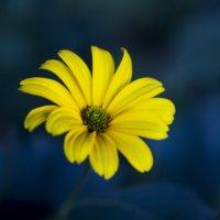 цветок :: олеся выкорчук