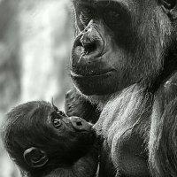 Мать и дитя :: Татьяна Симонова