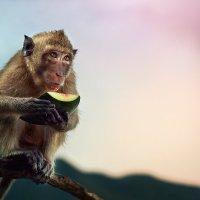 завтрак обезьяны :: Антон Лихач