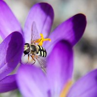 Весна... :: Мисак Каладжян