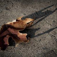 Осень... :: Мисак Каладжян