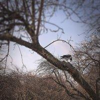 Осень в парке Коломенское :: Эльмира Суворова