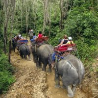 Сафари на слонах :: Алексей Окунеев