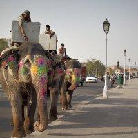 Слоны на улицах Джайпура... :: Игорь