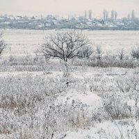 Зимнее поле :: Александр Бурилов