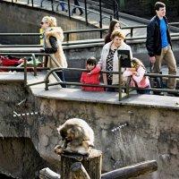 Зоопарк :: Владимир Воробьев
