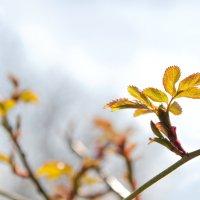 Весна)) :: Ирина Шуба