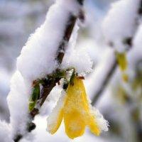 Суровая Краснодарская весна :: Анастасия Якаева
