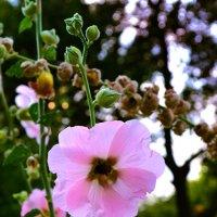 Цветок :: Анна Каспер
