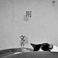 полчаса из жизни кота :: Виктория Еремеева