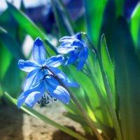 Пробуждение весны :: Тамрико Дат