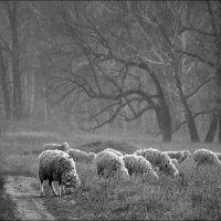 Сельская :: Oleg P.
