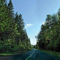 Лесные дали :: Константин Беляев