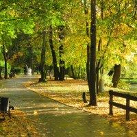 Осень золотая :: Александр Яковлев