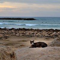 Морской кот :: Leonid Korenfeld