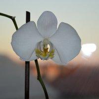 Цветок :: Евгений Пак