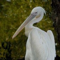 В зоопарке :: Астарта Драгнил