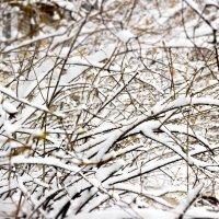 Мартовский снег :: Дмитрий Тарарин