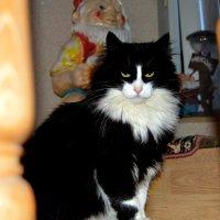 Наш любимец кот Янька. :: Михаил Столяров