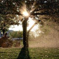 Утренняя уборка... :: Roman Mordashev