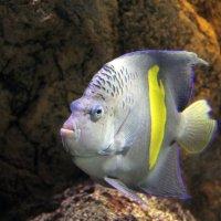 Тропическая рыбка :: Aнна Зарубина